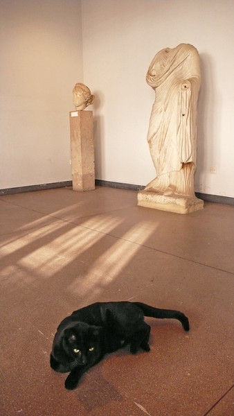 National archaeology museum, Rabat - Ancient Roman statues, recovered from nearby Volubilis, keep watch, headless or not, over the museum's resident cats.