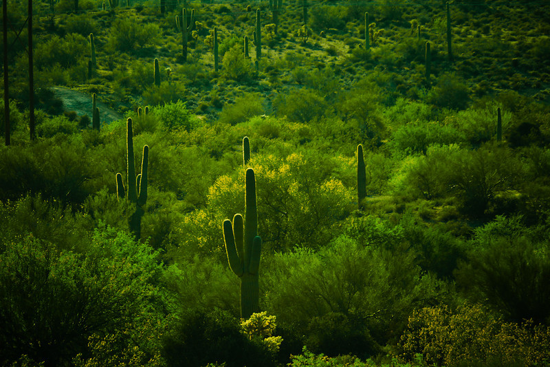 Landscape, Goldfield, Arizona