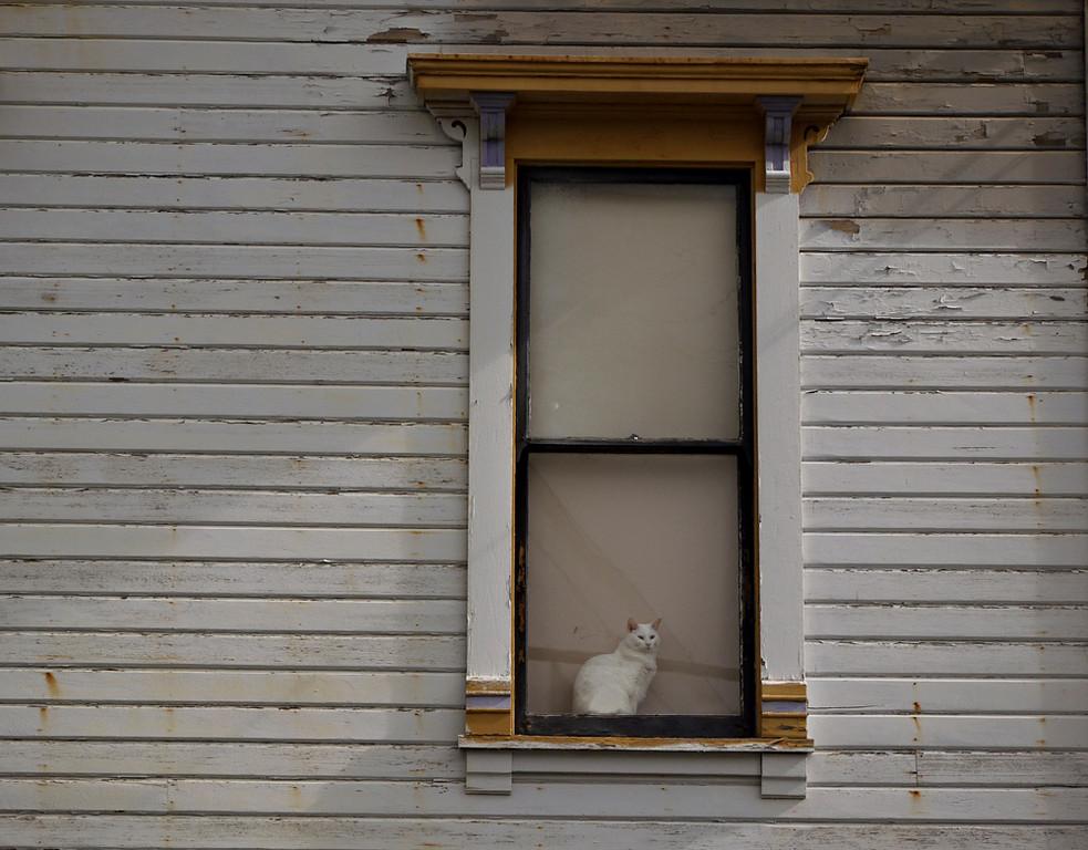 White on white, Astoria, Oregon