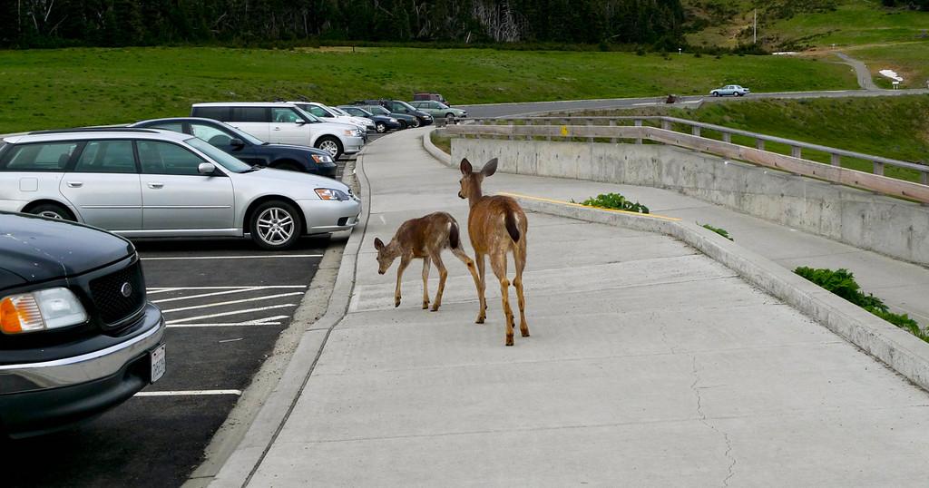 Right of Way,Olympic National Park, Washington