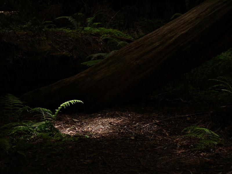 Hendy Woods State Park, Fort Bragg, California
