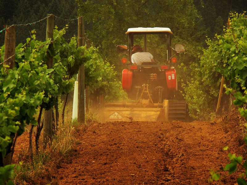 Working in the vineyard, Roseburg - The Girardet vineyards cover thirty acres southwest of Roseburg on the spot where the cool coastal climate meets the warm interior of the Umpqua Valley.