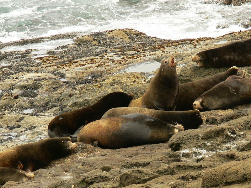 Sounding off, Simpson Reef Overlook - Seven sleeping sea lions never seemed to miss a moments rest, despite the loud noises overhead.