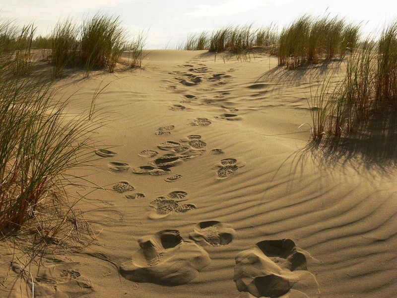 The Mark of Man - I found these footsteps of a photographer who had preceded me, imprinted on the drifting sands of the Oregon Dunes National Recreation Area. Before the day is out, they will fill with sand and vanish forever.