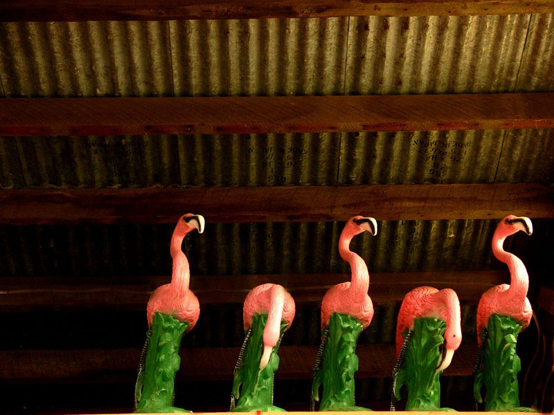 Flamingo Roost, Clatskanie - A quintet of Mexican plastic flamingos lodges in the rafters of a roadside tourist shop in Clatskanie. They seem to belong there.