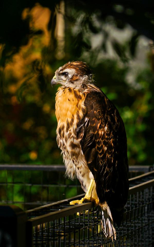 New plumage