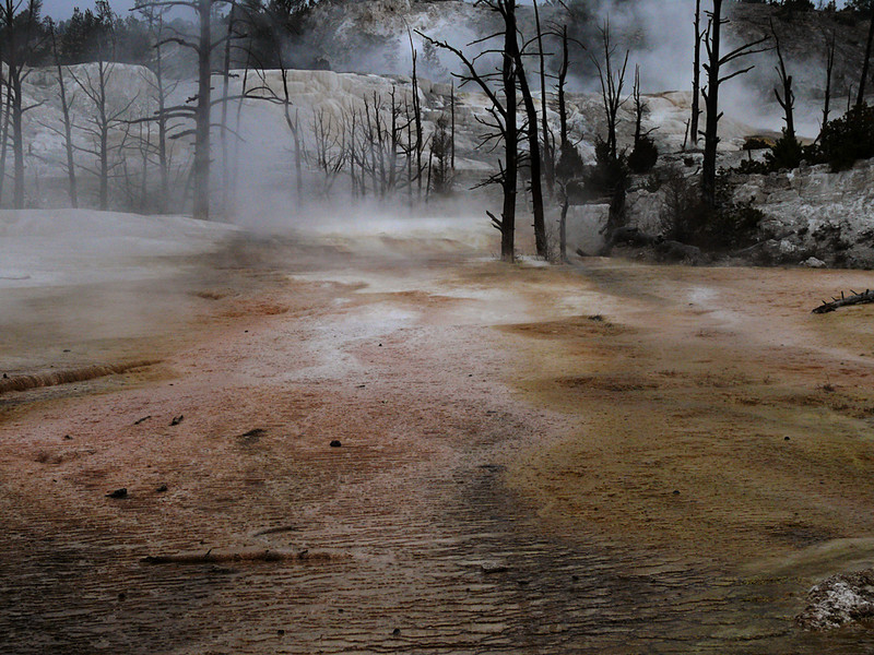 Frozen forest, Mammoth Hot Springs, Yellowstone, WY