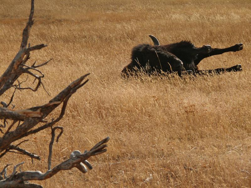 Stretch, Yellowstone, WY