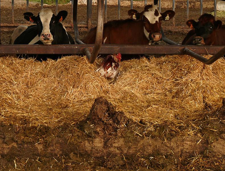 Farm friends, near Logan, UT