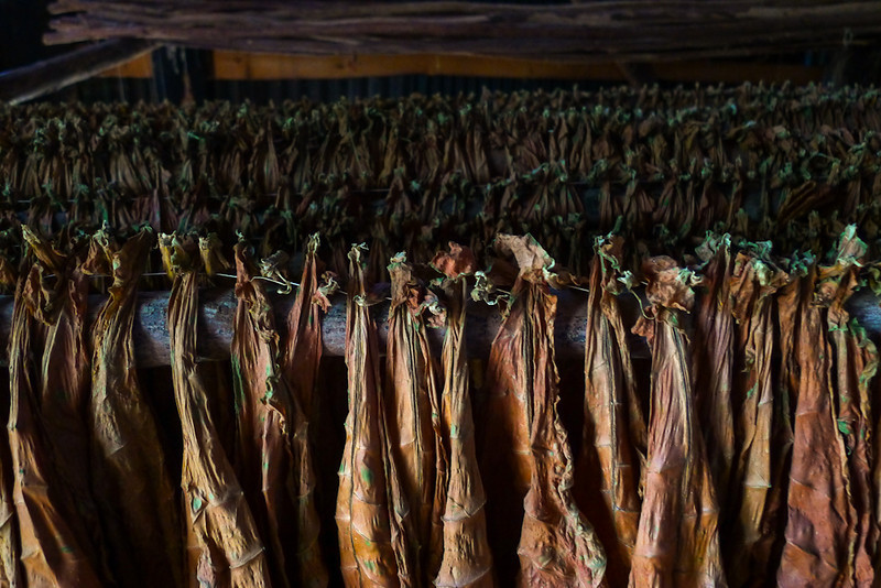 Tobacco barn, Havana