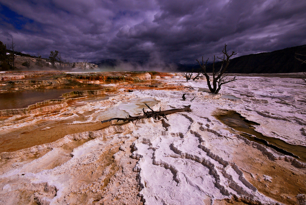 Canary Springs, Mammoth Hot Springs