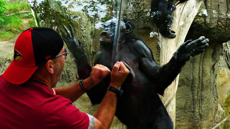 Massage, San Diego Zoo