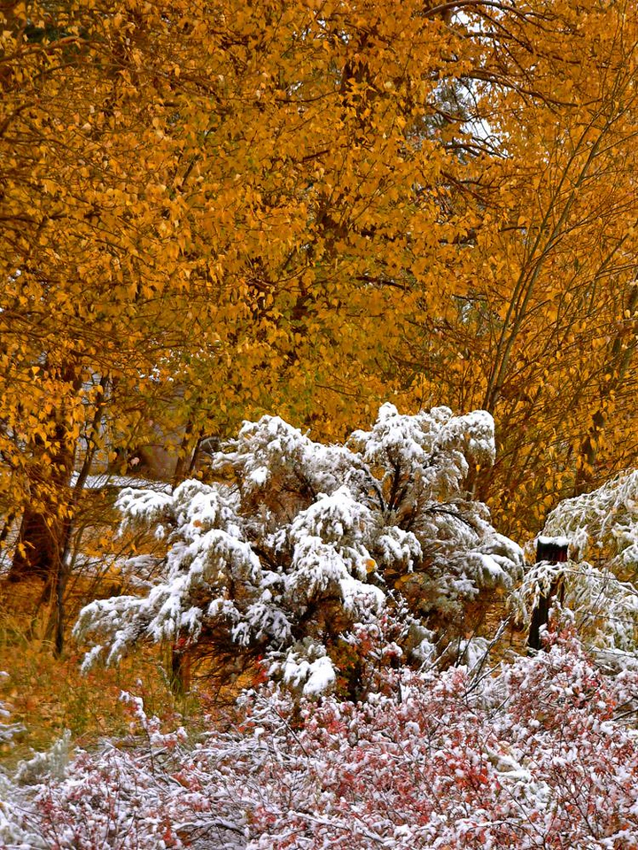 Yellow, White and Red - The colors of fall and winter greet each other near Bridgeport.