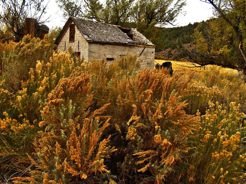 Old Barn, near Wellington, Nevada - Caved in roof and all, this old Sierra stone barn speaks of a time long past. I photographed it in a fierce wind, which churns the autumn sage into frenzy at my feet.