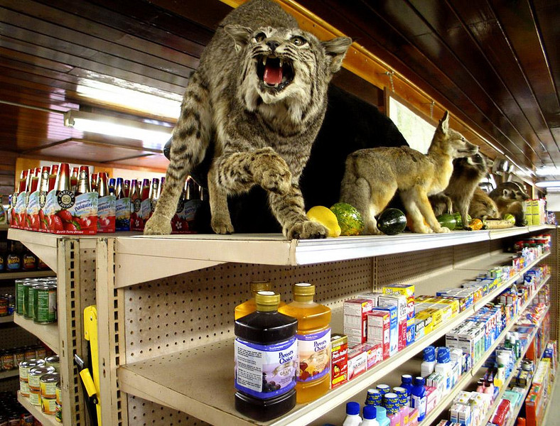 Snarling Shelves, Walker - Stuffed animals and cold medications make strange shelf partners in this Walker, California store, not far from the Nevada border.