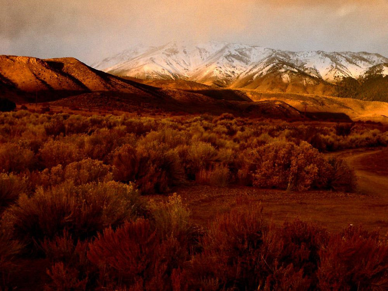Desert Light at Dawn - Daybreak in the Eastern Sierras brings light to the desert that is simultaneously mysterious and beautiful.