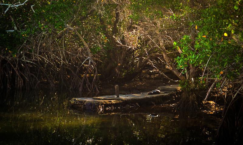 Abandoned pier, Punta Espinosa, Fernandina Island, The Galopagos