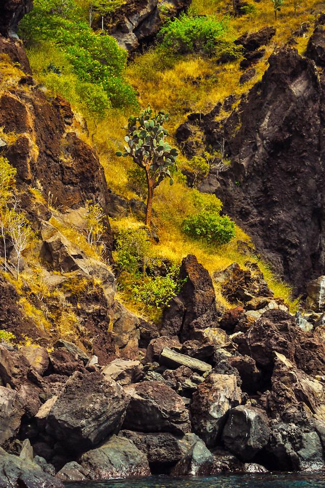 Landscape, Espumilla, Santiago Island, The Galapagos