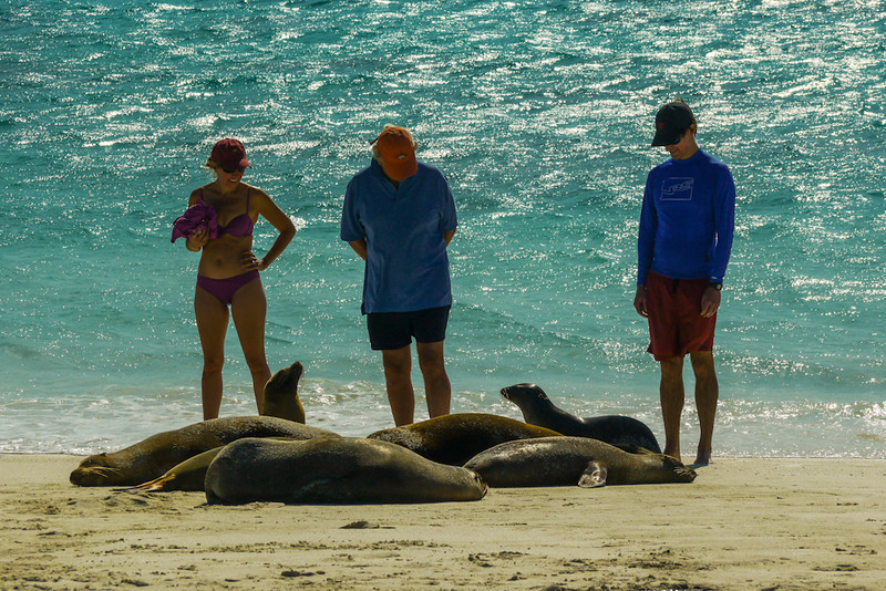 Sea Lion colony, Gardner Bay, Espanola Island, The Galapagos