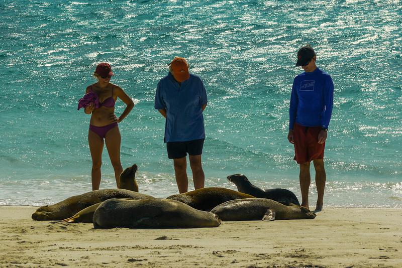 Sea Lion colony, Gardner Bay, Espanola Island, The Galapagos
