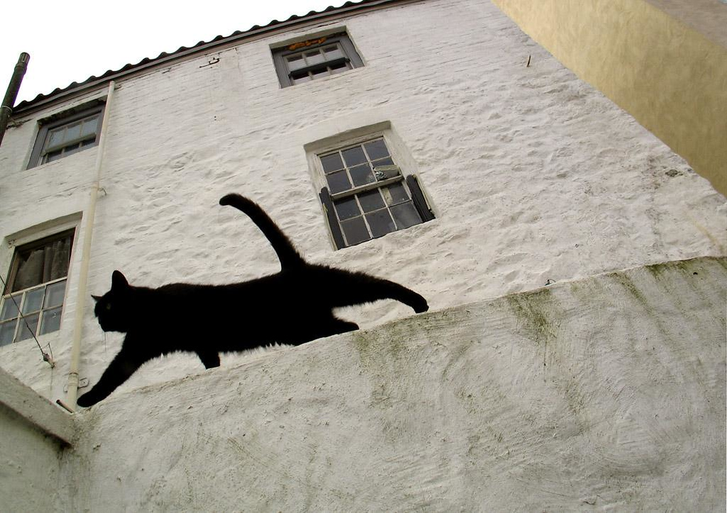 Cat Stretch, St Peters Port - While climbing down a long flight of stairs behind a cluster of hillside St. Peters Port houses, a black cat took considerable interest in my cameras. Everytime I would lift the camera to make a picture, the cat would come over and sniff it. Finally it tired of the game, stretched, and stalked away. And that's when I got my picture.