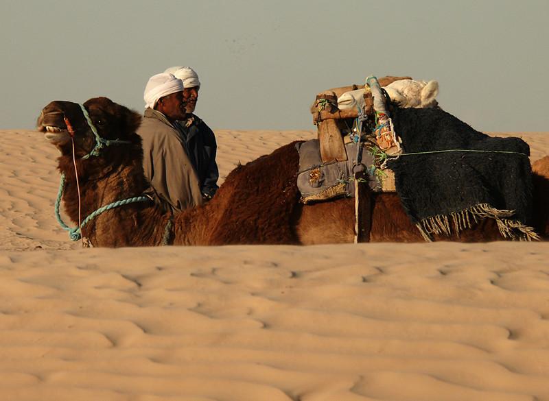 Ship of the desert, Douze