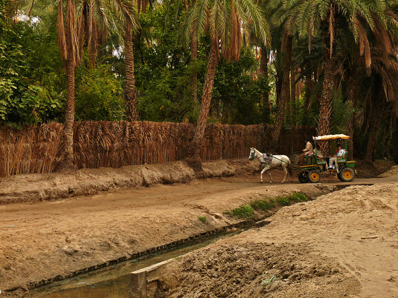 Touring Tozeur Oasis