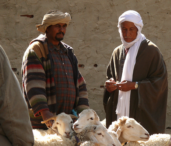 Sheep salesmen, Douze