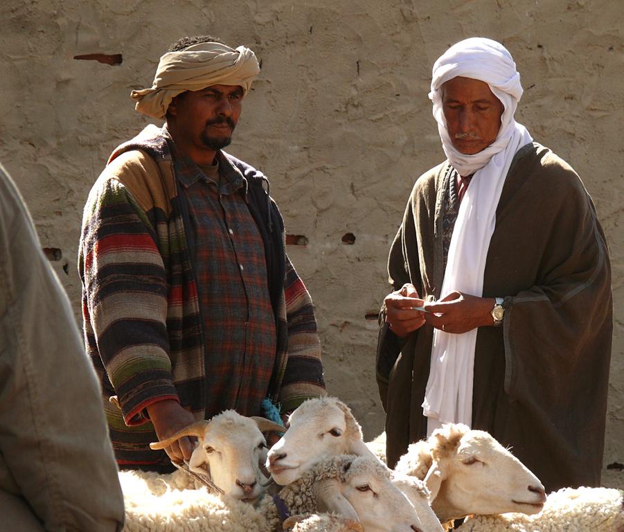 Sheep salesmen, Douze