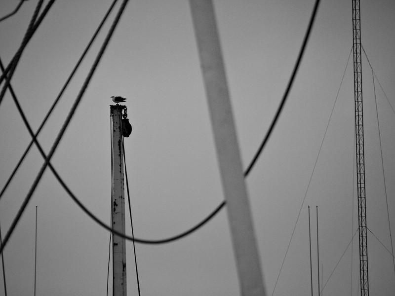 On the mast, Gloucester