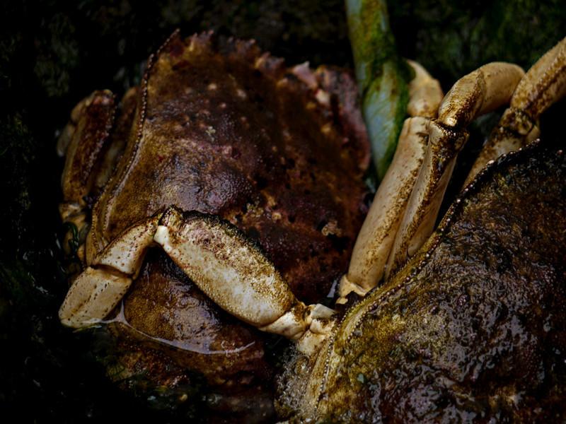 Crabs,Gloucester Maritime Center