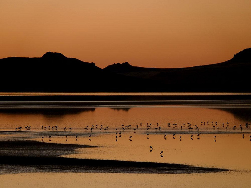 Waders, Antelope Island - Not only is the island itself reflected in this image, but each of the many wading birds that feed in its surrounding waters at sunset also cast their reflections, doubling the number of birds we see.
