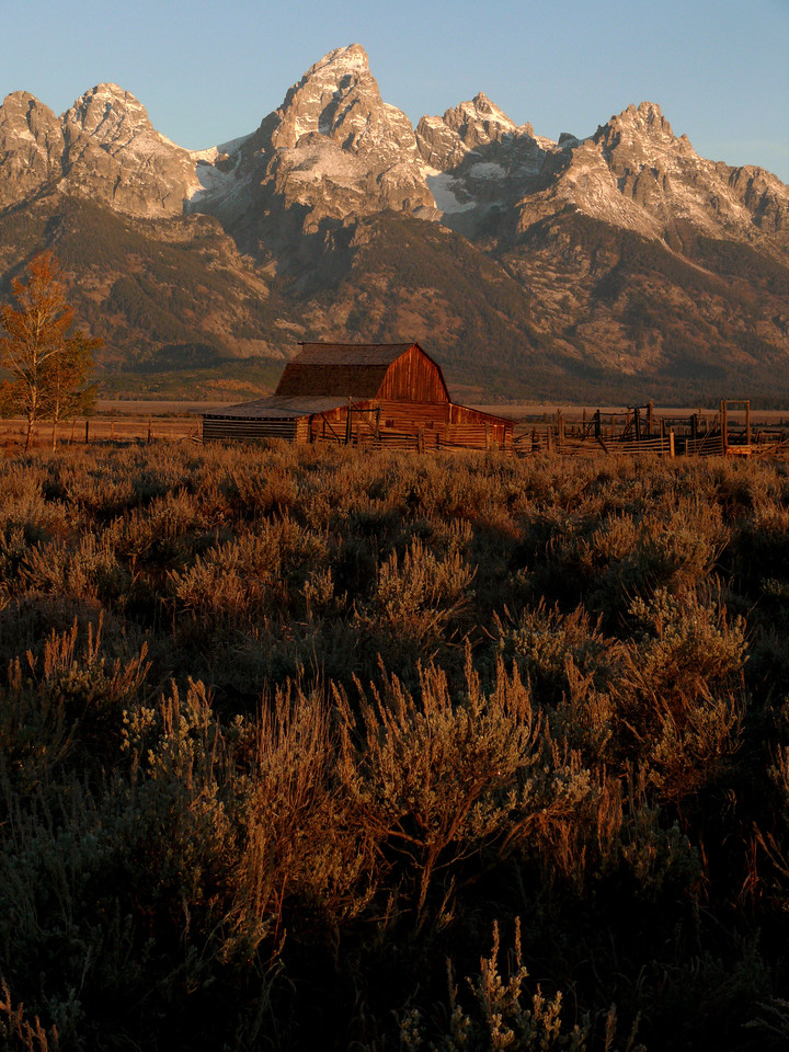 Grand Teton National Park - The old Moulton Barn, dating from the late 19th century, floats on a sea of sage below the Grand Teton Range.