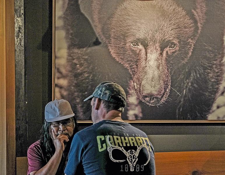 12 bear tales