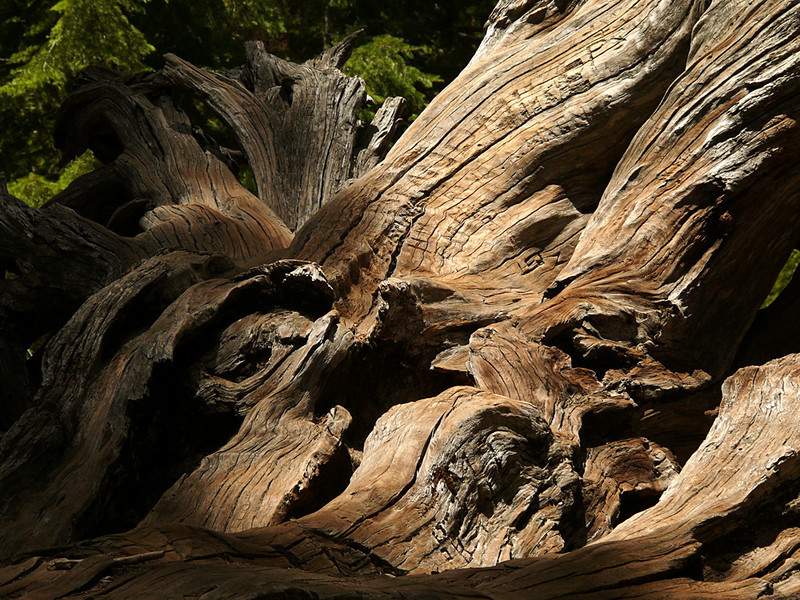 Inscriptions, fallen redwood, Yosemite