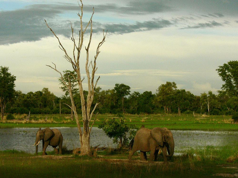 Twilight, South Luangwa National Park - A wet-season safari in Zambia offers photographers abundant sightings of African wildlife in an emerald green setting under cloud streaked skies.