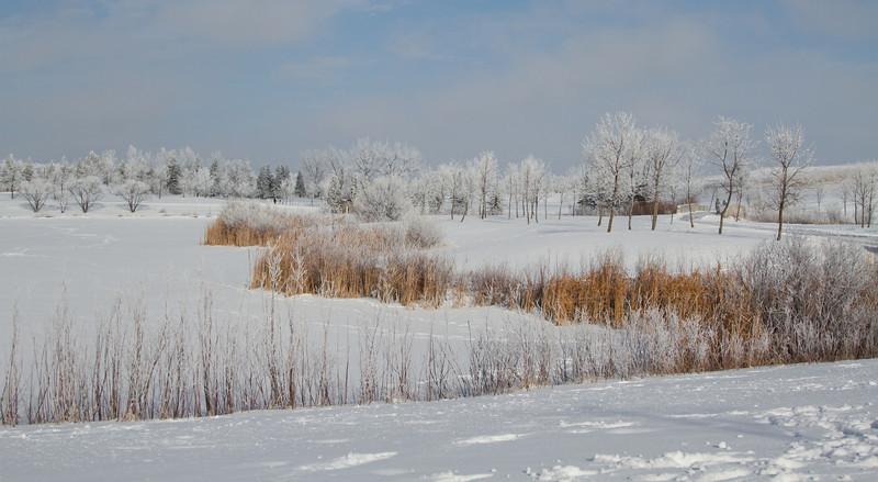 Hoar Frost at Kilcona Park, Manitoba