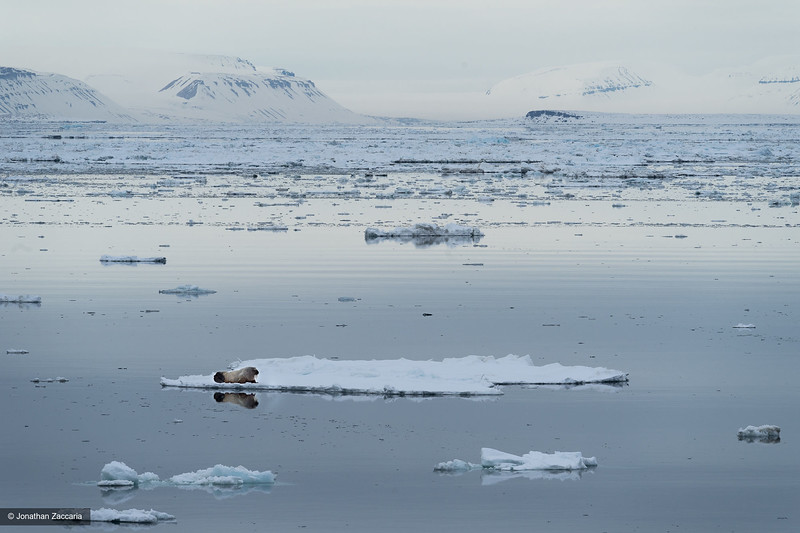 Svalbard, National Geographic Explorer