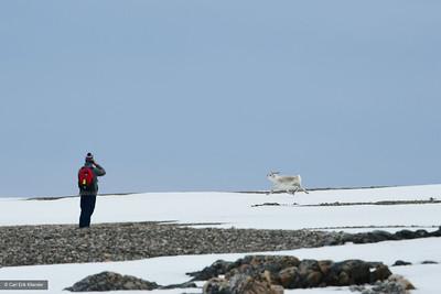 Svalbard, guest watching Svalbard reindeer