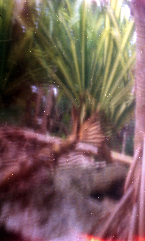 Garden in the Grove, Freeport, Bahamas (Paper Camera Vision)