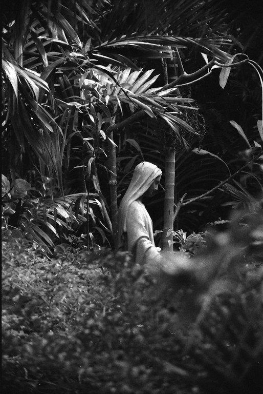 Garden in the Grove, Freeport, Bahamas in Black and White