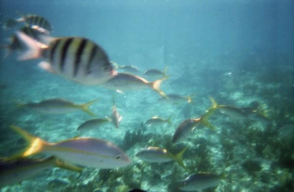 Snorkeling Near Freeport