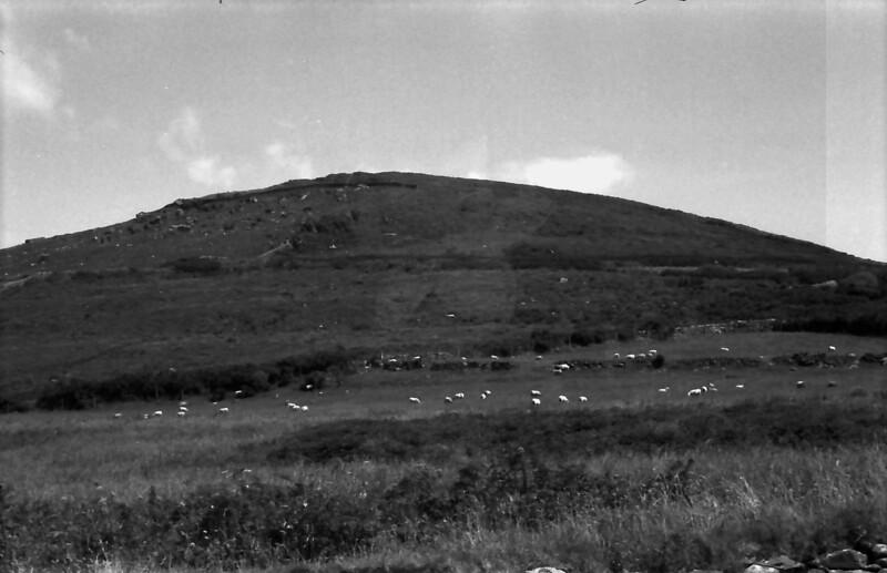 15 7-15-06 sheep