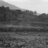 8 7-8-06 Connemara