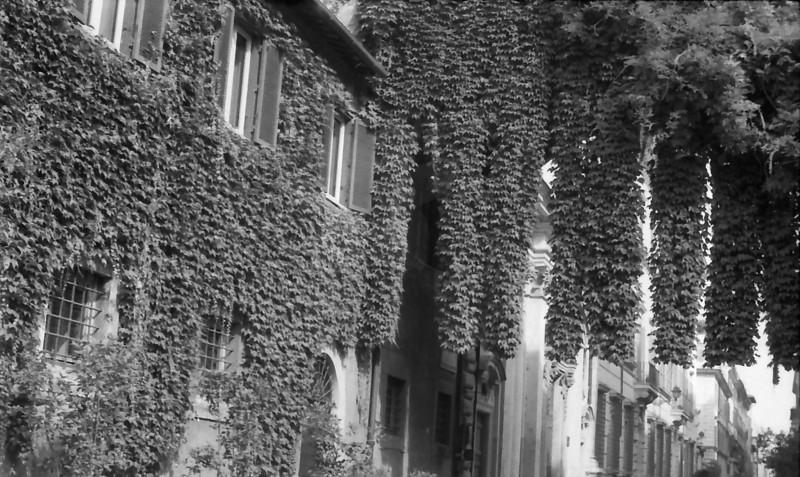 32 Rome Foliage