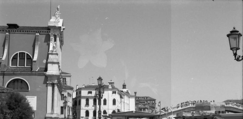 2 Venice street pigeons