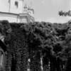 31 Rome Foliage