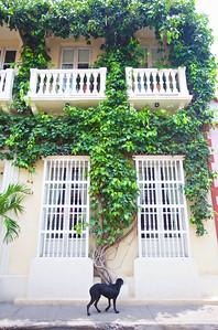 Cartagena. Colombia