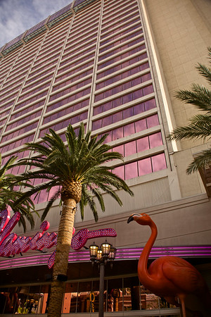 The Flamingo Hotel