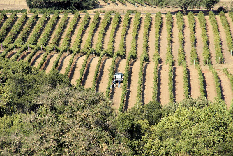 SONY DSC - harvest time